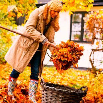 Что нужно успеть сделать в саду в октябре